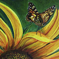 Monarch Butterfly On A Sunflower by Silvia Philippsohn