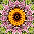 Monarch Butterfly On Milkweed Kaleidoscope by Cynthia Woods