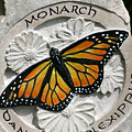 Monarch by Ken Hall