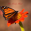 Monarch On Tithonia Mother's Day Gifts by Zina Stromberg