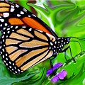 Monarch Swirl 1 by Jim  Darnall