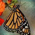 Monarch by WB Johnston