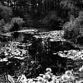 Monet Lake by Matthew Altenbach