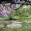 Monet Water Garden by Nancy Sisco
