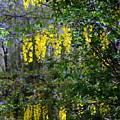Monet's Garden Abstract II by Donald Hansen