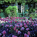 Monet's House With Tulips by Kathy Yates