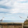 Monitored Seagull Take-off by Iordanis Pallikaras