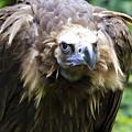 Monk Vulture 3 by Heiko Koehrer-Wagner