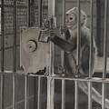 Monkey Business by Wendy Zaro