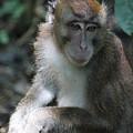 Monkey Business by Wilko Van de Kamp