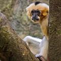 Monkey Chillin by Scott Stewart
