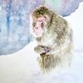 Monkey In Meditation by Yoshiko Mishina