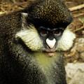 Monkey by Kristie Ferrick