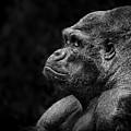 Monkey by Lijie Zhou