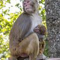 Monkey Mom by Corey Chimko