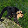 Monkey On My Back by Tony Beck