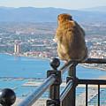 Monkey Overlooking Spain by Heather Coen