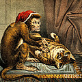 Monkey Physician Examining Cat For Fleas by Wellcome Images
