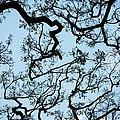 Monkey Pod Tree Patterns by Charmian Vistaunet