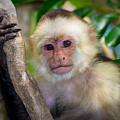 Monkey Portrait by Rikk Flohr