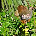 Monkey Time by Tom Dowd