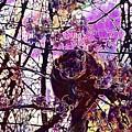 Monkey Tree Zoo Animals Nature  by PixBreak Art