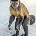 Monkey_0726 by Enio Depaula