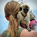Monkeying Around by Cornelia DeDona