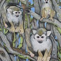 Monkeys by Kathleen Smith