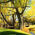 Mono Lake Garden Bridge by Tommy Anderson