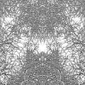 Mono Trees by Steve Ball