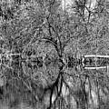 Monochrome Autumn Reflections by Robert Meyers-Lussier