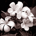 Monochrome Hawaii No. 3 by Bill Morson