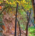 Monrovia Canyon In Fall by Viktor Savchenko