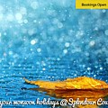 Monsoon Special One Day Picnic Spot Near Khadakwasla Splendour Country by Splendour Country