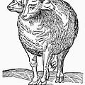 Monster, 16th Century by Granger