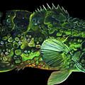 Monster Melon by Geoffrey Filer