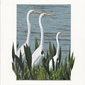 Montage With 3 Great White Egrets by Sandy Gorton Houseman