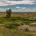 Montana Country And Tree by John McGraw