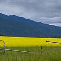 Montana Gold by Idaho Scenic Images Linda Lantzy