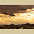 Montana Gold by Susan Kinney