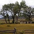 Montana Homestead by Marty Koch