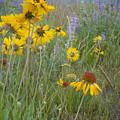 Montana Wildflowers by Idaho Scenic Images Linda Lantzy