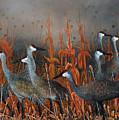 Monte Vista Sandhill Cranes by Mike Ross
