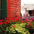Montecillo  by Elaine Manley
