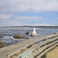 Monterey Seabird California Usa by John Shiron