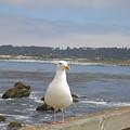 Monterey Seabird II California Usa by John Shiron