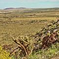 Montezuma Rd-borrego Occitillo Wells View by Daniel Hebard