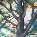 Monticello Tree by Colleen Gartner