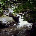 Montreat Creek North Carolina by Eva Thomas